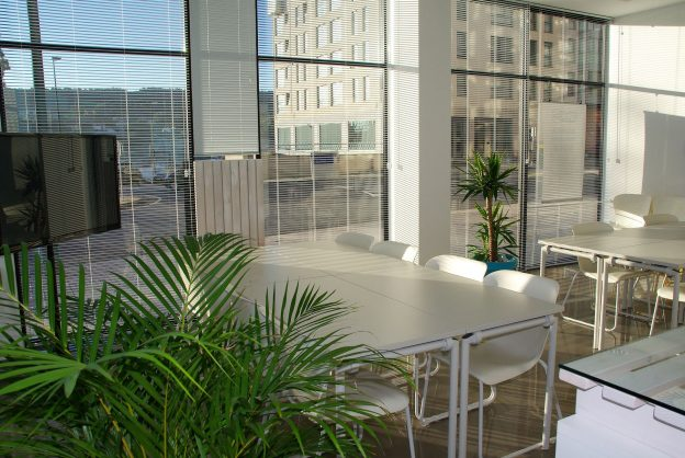 Healthy office space with plants and natural light.