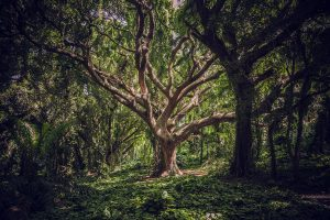 Ancient tree – our beautiful home